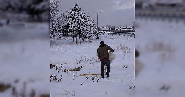 Merzifon'da yaban hayvanları için doğaya yem bırakıldı