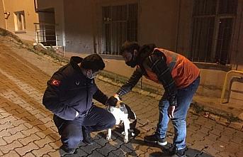 Ordu'da eziyet edildiği öne sürülen sokak köpeğini belediye başkanı sahiplendi