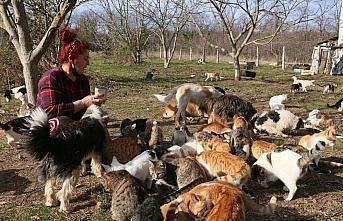 Samsun'da hayvansever kadın tehdit edildiği iddiasıyla şikayetçi oldu
