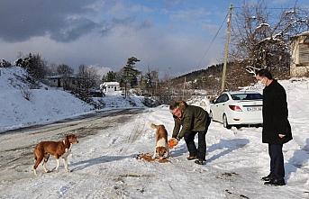 Sinop İl Özel İdaresi'nden sokak hayvanlarına mama