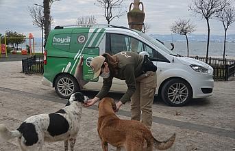 Sinop ve Kastamonu'da sokak hayvanlarına yardım...