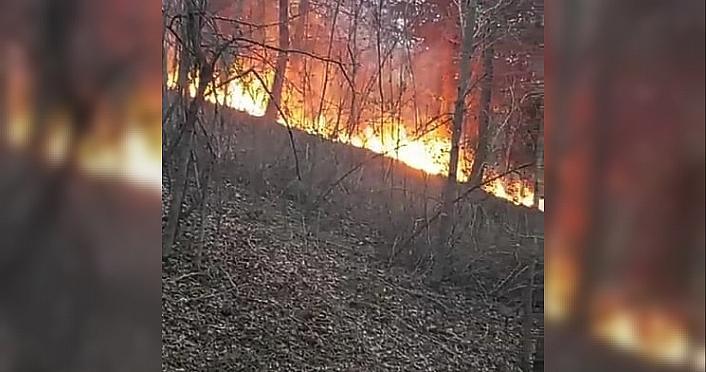 Sinop'ta orman yangını çıktı