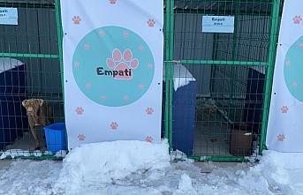 Sinop'ta soğuktan etkilenen sokak hayvanları için...