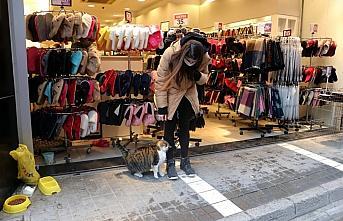 Soğukta üşüyen kedilere mağazanın kapılarını...