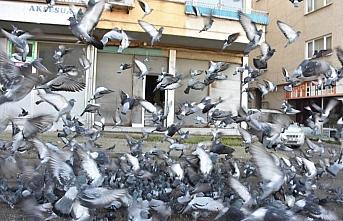 Sokağa çıkma kısıtlamalarında da güvercinleri...