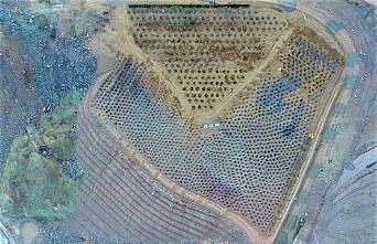 Yusufeli yeni yerleşim yerine taşınan 15 bin ağaç 111 dekar alana dikildi