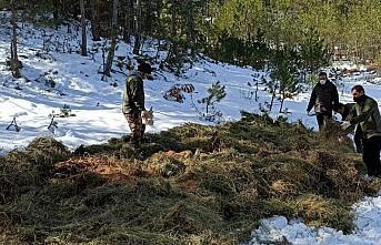 Bolu'da yaban hayvanları için doğaya 5 ton yem bırakıldı