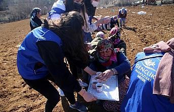 Gönüllü gençler imece usulüyle Taşköprü sarımsağını...