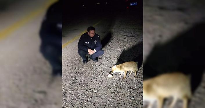 Kastamonu'da polisler yolda gördükleri tilkiyi besledi