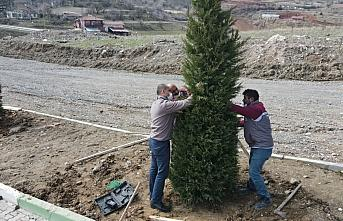 Tokat Belediyesi şehitlikte ağaçlandırma ve bakım çalışmaları yapıyor