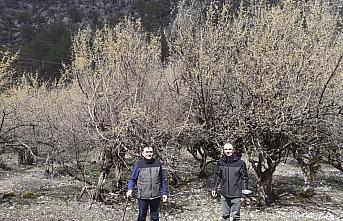 Bolu Orman Bölge Müdürü Bıyıklı, Göynük'te kızılcık ormanını inceledi