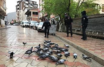Torul'da polisler sokak hayvanlarını besledi