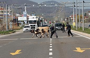 Bolu'da yaylalara