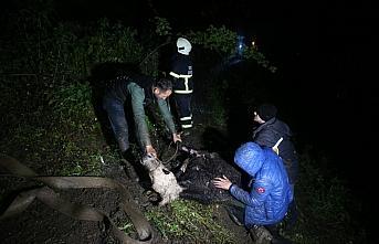 Düzce'de itfaiye ekipleri 40 metrelik uçuruma düşen ineği kurtarmak için seferber oldu
