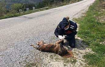 Kastamonu'da jandarmadan sokak hayvanlarına yiyecek desteği