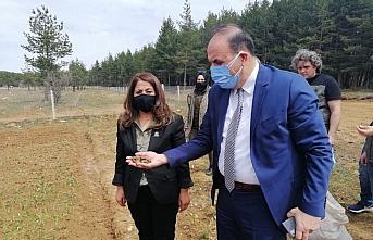 Zonguldak Orman Bölge Müdürü Bayraktaroğlu'ndan Safranbolu Tıbbi ve Aromatik Bitki Şehri'nde inceleme