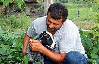 Amasyalı çiftçi, annesinin kabul etmediği kuzu