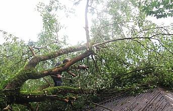 Giresun'da yağış nedeniyle devrilen ağaç eve zarar verdi