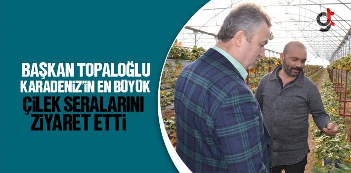 Başkan Topaloğlu Karadeniz'in En Büyük Çilek...