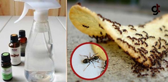 Evinizi İstila Eden Karıncalardan Kurtulmak İçin...