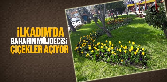 İlkadım'da Baharın Müjdecisi Çiçekler Açıyor