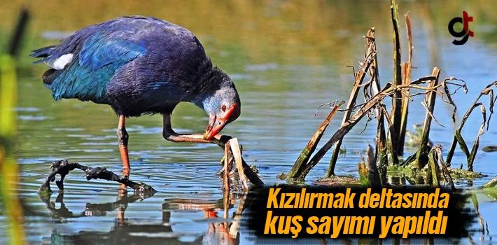 Kızılırmak Deltasında Kuş Sayımı Yapıldı