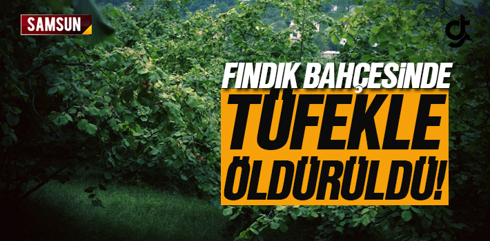 Samsun Ayvacık'ta Fındık Bahçesinde Öldürüldü