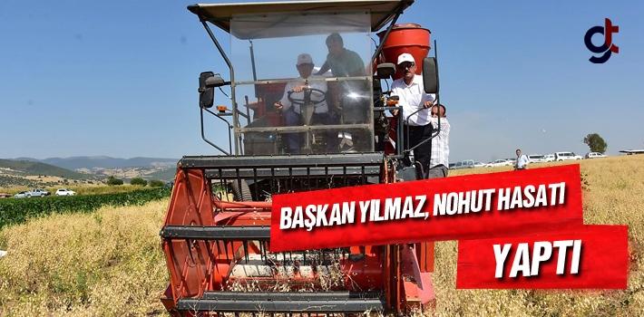 Samsun Haber: Başkan Yılmaz, Nohut Hasatı Yaptı