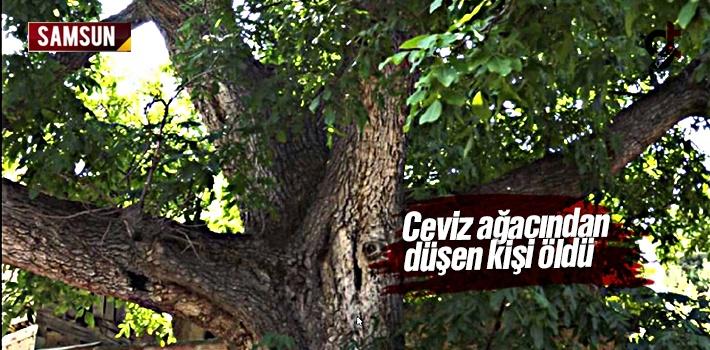 Samsun Salıpazarı'nda Ceviz Ağacından Düşen...