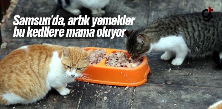Samsun'da Artık Yemekler Kedilere Mama Oluyor