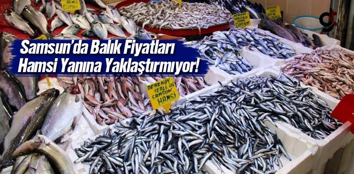 Samsun'da Balık Fiyatları