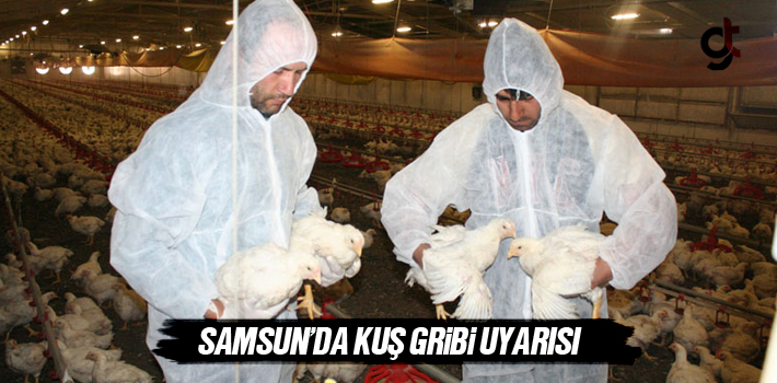 Samsun'da Kuş Gribi Uyarısı!
