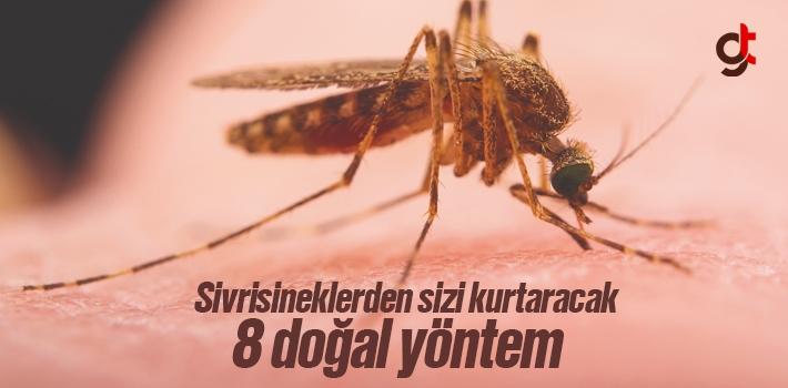 Sivrisineklerden Kurtulmak İçin Doğal Yöntemler...
