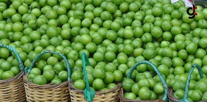 Yeşil Erik Yemeniz İçin 11 Neden!