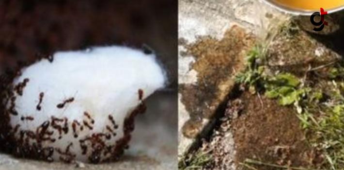 Zarar Vermeden Karıncaları Evden Kovabilmeniz İçin...