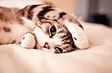 Kedi sahibi olmak, ruh sağlına iyi geliyor, kedi beslemenin faydaları